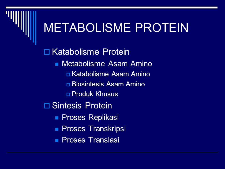 METABOLISME PROTEIN  Katabolisme Protein Metabolisme Asam Amino  Katabolisme Asam Amino  Biosintesis Asam Amino  Produk Khusus  Sintesis Protein