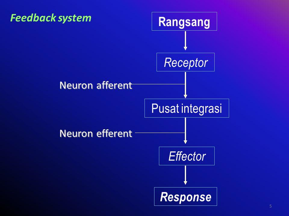 5 Feedback system Rangsang Receptor Pusat integrasi Effector Response Neuron afferent Neuron efferent