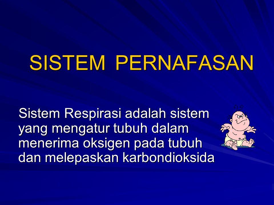 SISTEM PERNAFASAN Organ pernafasan bagian atas –Hidung bagian luar –Rongga hidung –Pharynx –Larynx –Trachea Organ pernafasan bagian bawah –Primary bronchus (kanan & Kiri) –Bronchiolus –Paru kanan Lobus superior Lobus intermediate Lobus inferior –Paru kiri Lobus Superior Lobus inferior