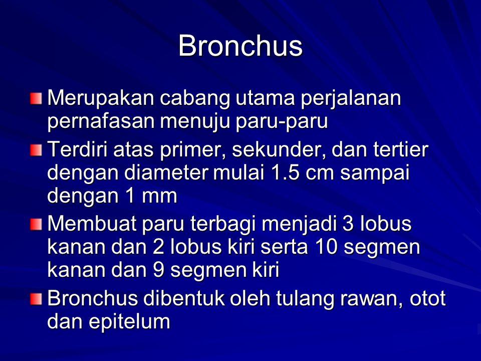 Bronchus Merupakan cabang utama perjalanan pernafasan menuju paru-paru Terdiri atas primer, sekunder, dan tertier dengan diameter mulai 1.5 cm sampai
