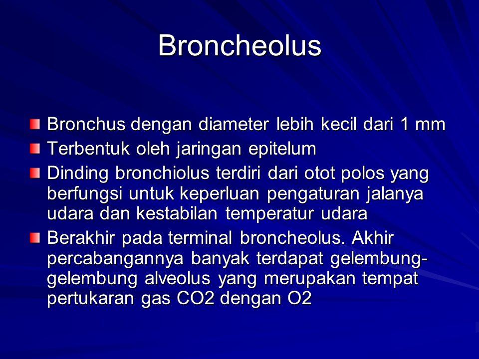 Broncheolus Bronchus dengan diameter lebih kecil dari 1 mm Terbentuk oleh jaringan epitelum Dinding bronchiolus terdiri dari otot polos yang berfungsi