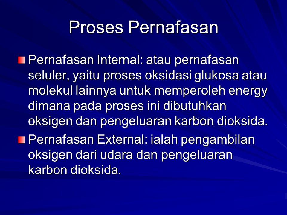 Proses Pernafasan Pernafasan Internal: atau pernafasan seluler, yaitu proses oksidasi glukosa atau molekul lainnya untuk memperoleh energy dimana pada