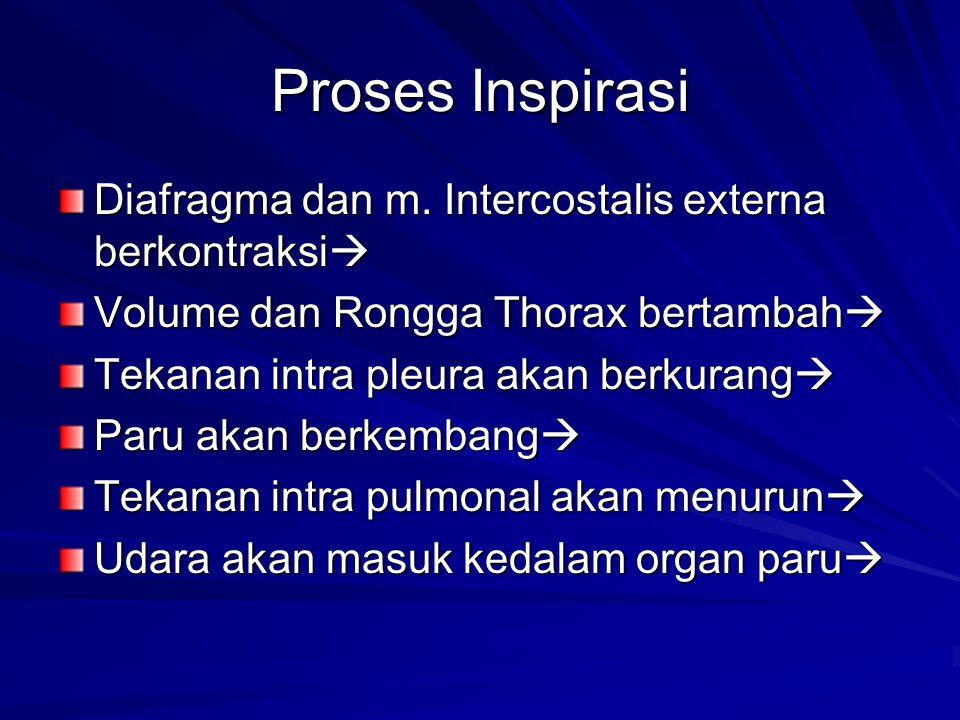 Proses Inspirasi Diafragma dan m. Intercostalis externa berkontraksi  Volume dan Rongga Thorax bertambah  Tekanan intra pleura akan berkurang  Paru