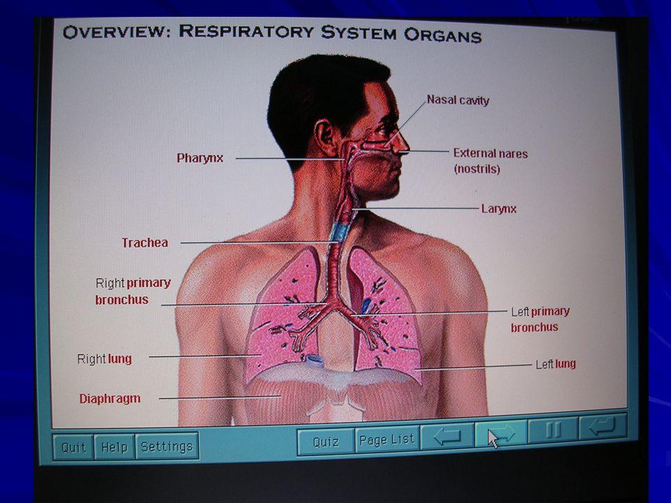 FISIOLOGI PERNAFASAN Fungsi paru2 : pertukaran O2 dan CO2Fungsi paru2 : pertukaran O2 dan CO2 Pd Pernafasan paru2 : O2 di ambil dari mulut dan hidung, via trachea dan pipa bronchiolus, terus ke alveoli dan berhub dg darah di kapiler pulmonaris (O2 dg darah dipisah, O2 di ikat oleh Hb lalu di bawa ke jantung).Pd Pernafasan paru2 : O2 di ambil dari mulut dan hidung, via trachea dan pipa bronchiolus, terus ke alveoli dan berhub dg darah di kapiler pulmonaris (O2 dg darah dipisah, O2 di ikat oleh Hb lalu di bawa ke jantung).