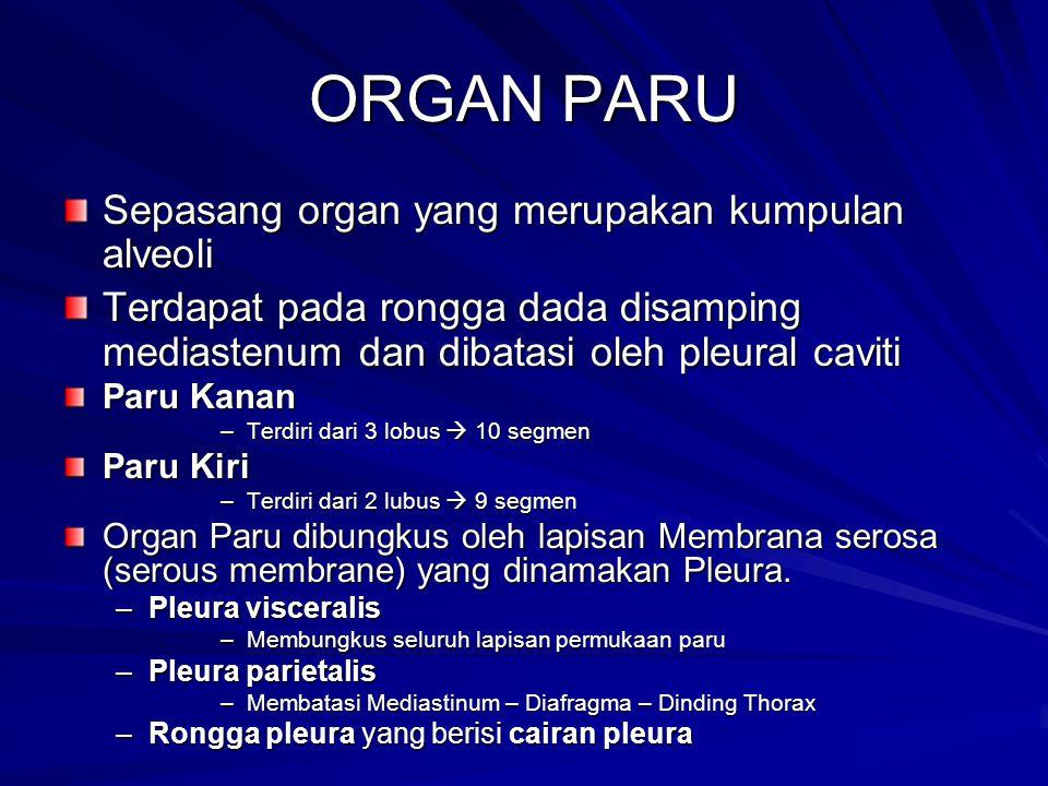 ORGAN PARU Sepasang organ yang merupakan kumpulan alveoli Terdapat pada rongga dada disamping mediastenum dan dibatasi oleh pleural caviti Paru Kanan