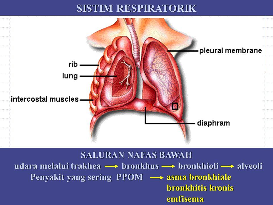 SISTIM RESPIRATORIK SALURAN NAFAS BAWAH udara melalui trakhea bronkhus bronkhioli alveoli udara melalui trakhea bronkhus bronkhioli alveoli Penyakit y
