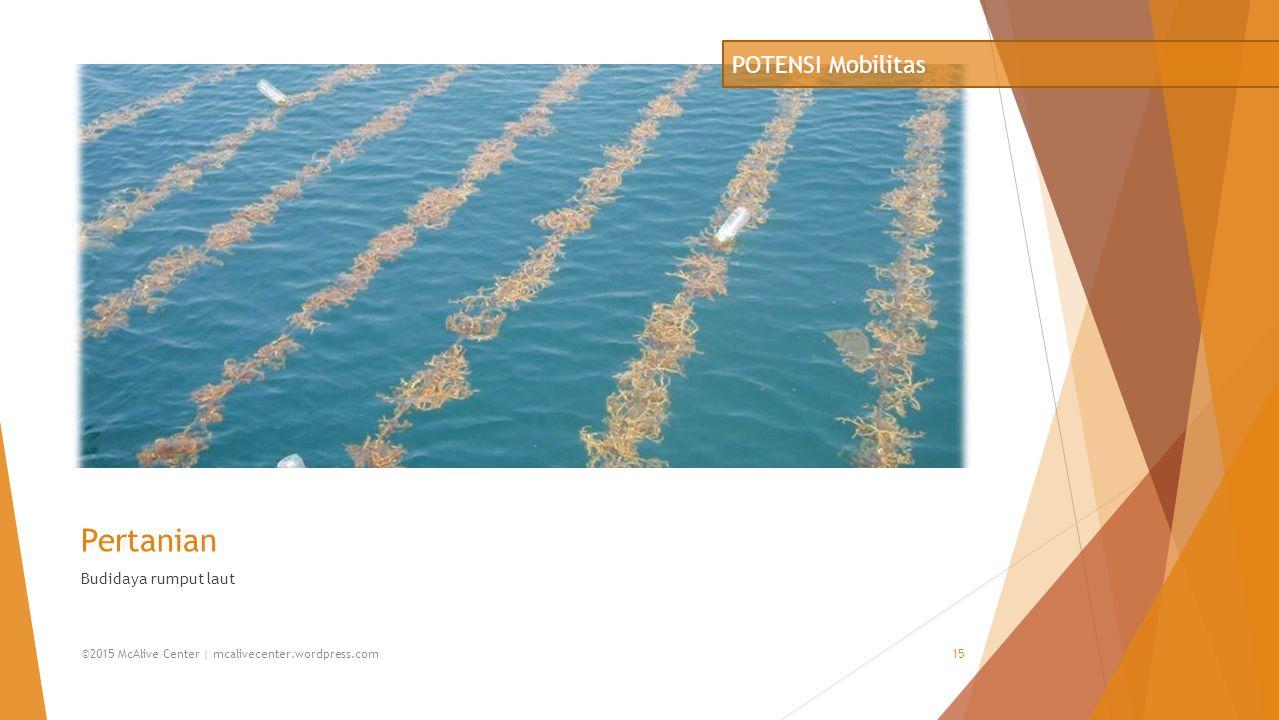 Pertanian Budidaya rumput laut POTENSI Mobilitas ©2015 McAlive Center | mcalivecenter.wordpress.com15