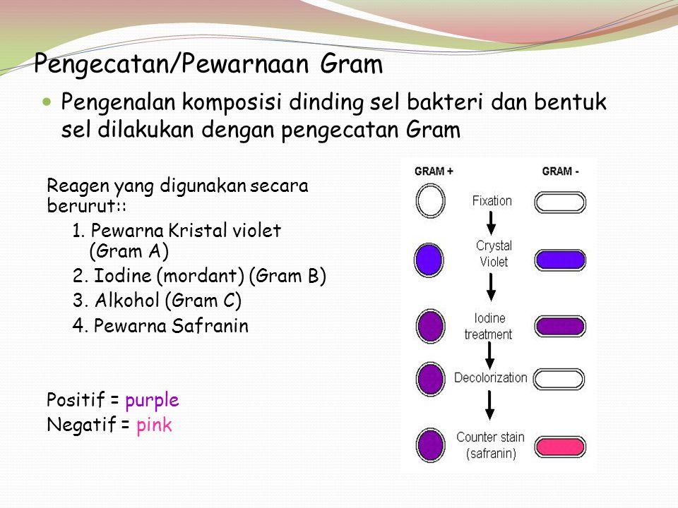 Pengecatan/Pewarnaan Gram Pengenalan komposisi dinding sel bakteri dan bentuk sel dilakukan dengan pengecatan Gram Reagen yang digunakan secara berurut:: 1.