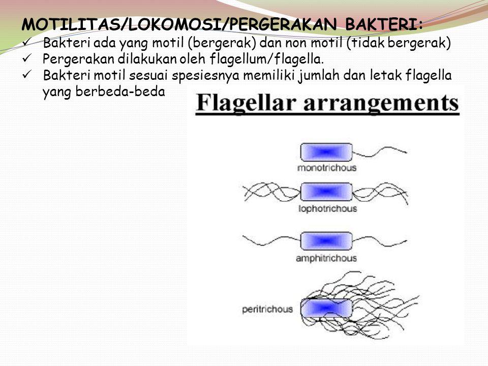 MOTILITAS/LOKOMOSI/PERGERAKAN BAKTERI: Bakteri ada yang motil (bergerak) dan non motil (tidak bergerak) Pergerakan dilakukan oleh flagellum/flagella.