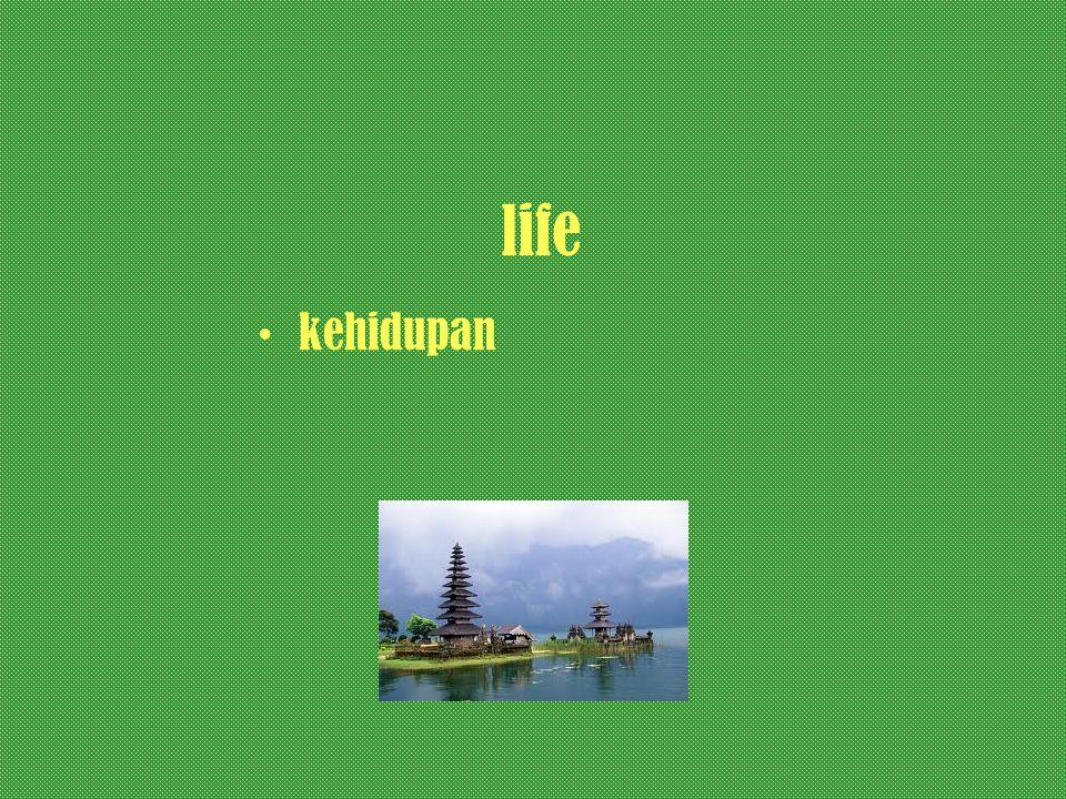 life kehidupan