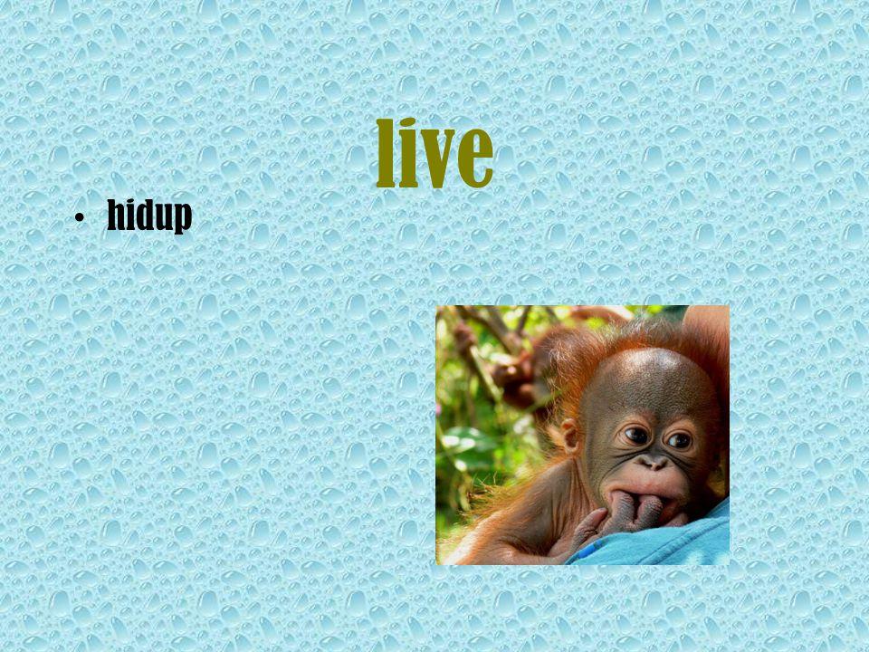 live hidup