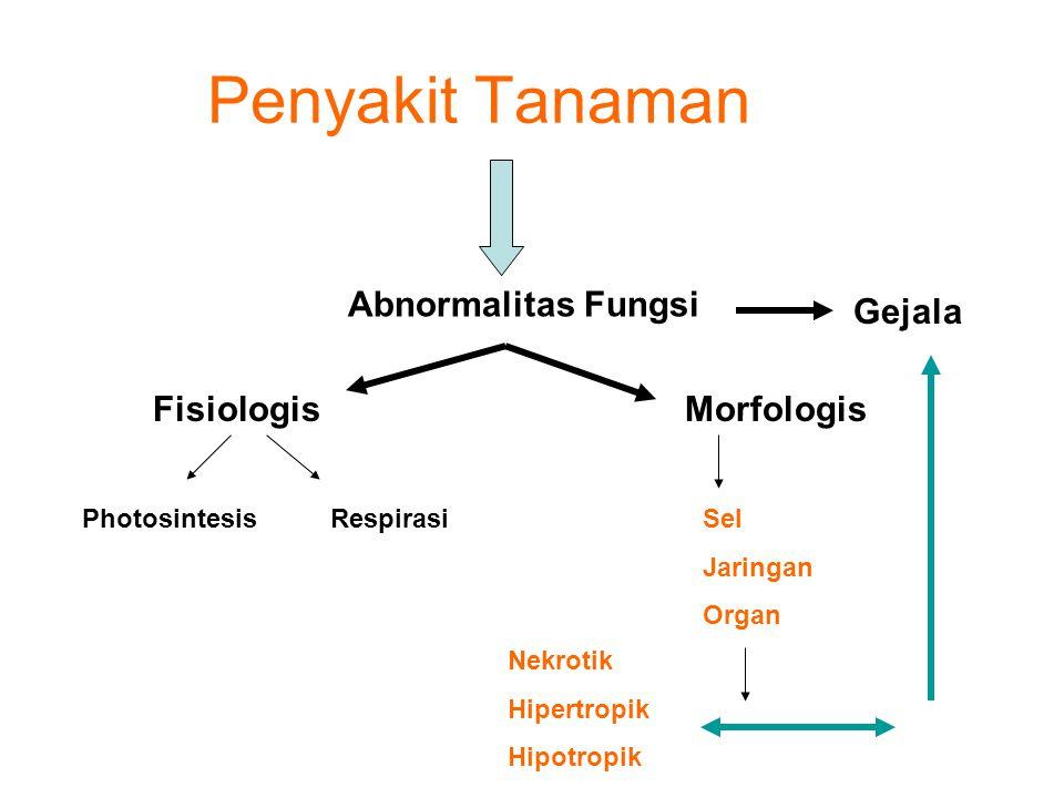 Penyakit Tanaman Abnormalitas Fungsi Gejala FisiologisMorfologis PhotosintesisRespirasiSel Jaringan Organ Nekrotik Hipertropik Hipotropik