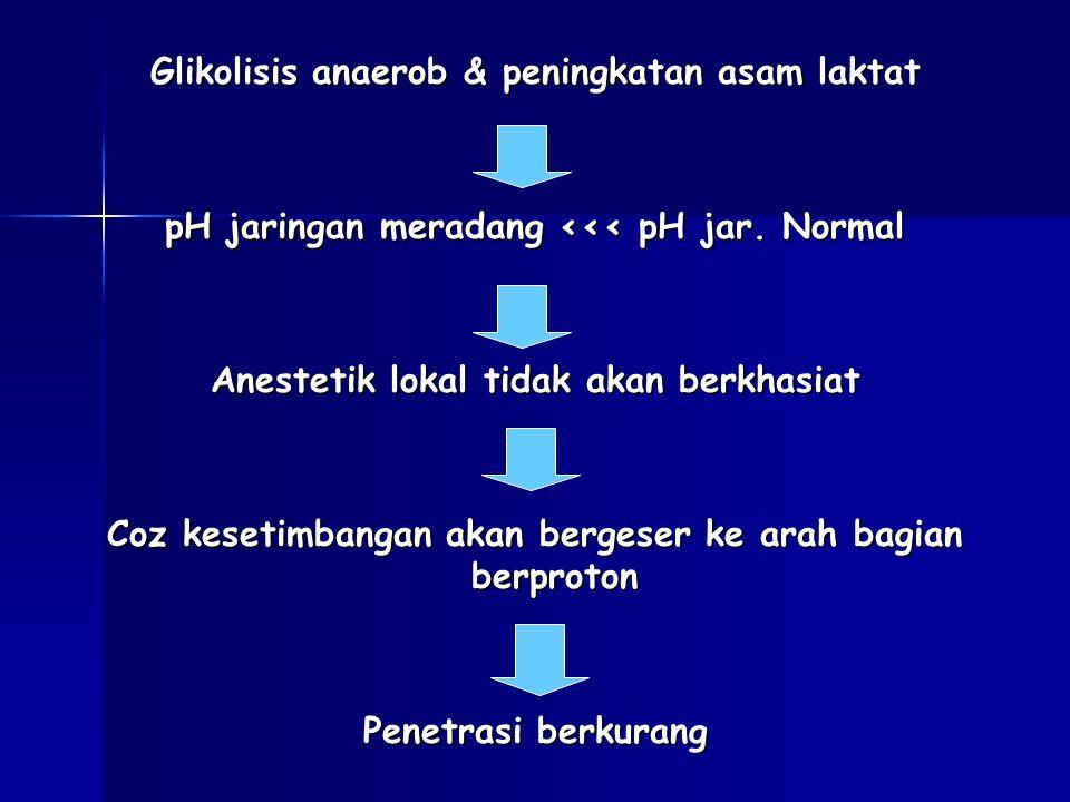 Glikolisis anaerob & peningkatan asam laktat pH jaringan meradang <<< pH jar.