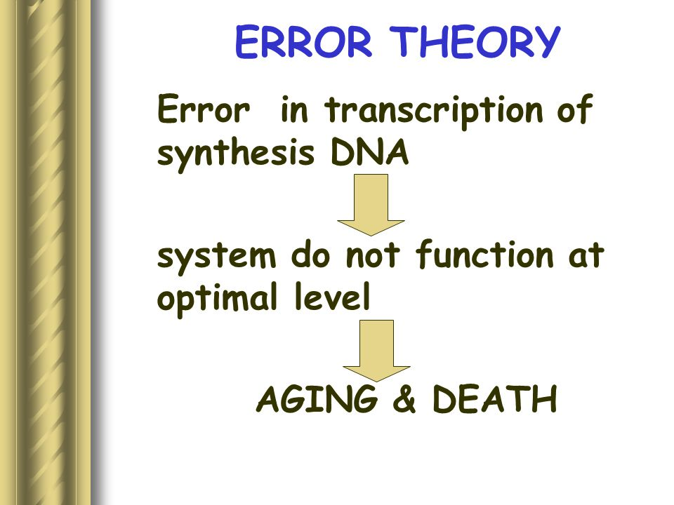 ERROR THEORY Error in transcription of synthesis DNA system do not function at optimal level AGING & DEATH