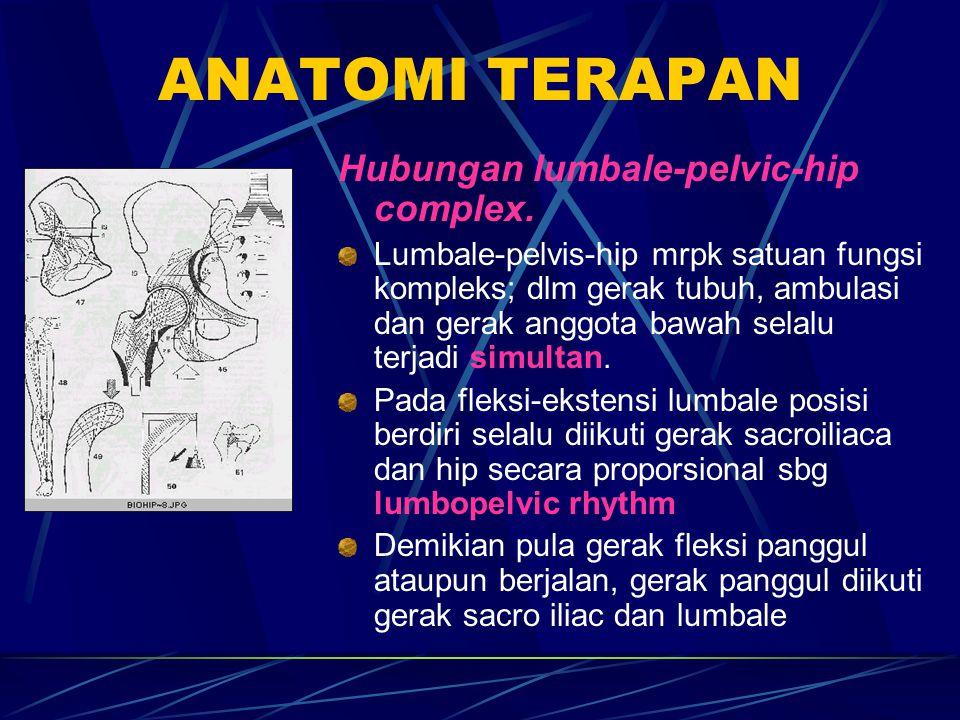 ANATOMI TERAPAN Hubungan lumbale-pelvic-hip complex. Lumbale-pelvis-hip mrpk satuan fungsi kompleks; dlm gerak tubuh, ambulasi dan gerak anggota bawah