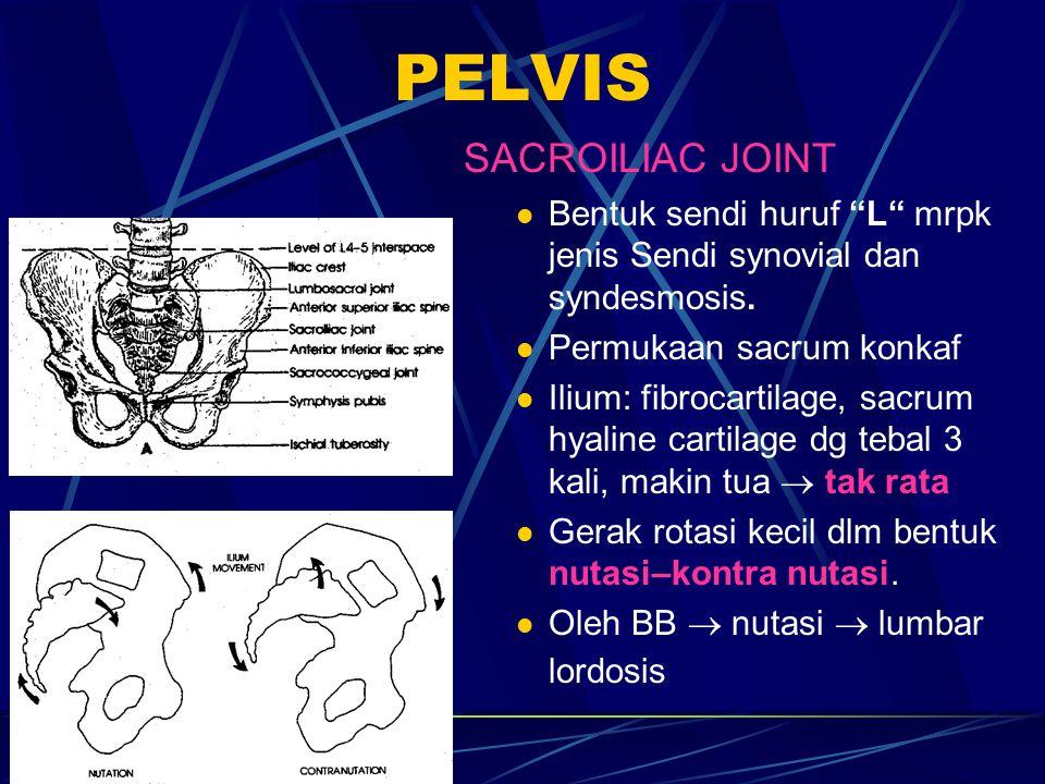 SACROILIAC JOINT (LANJUTAN) Sistem ligamenta: Dihubungkan lig sacrointerosseus (terkuat), lig.