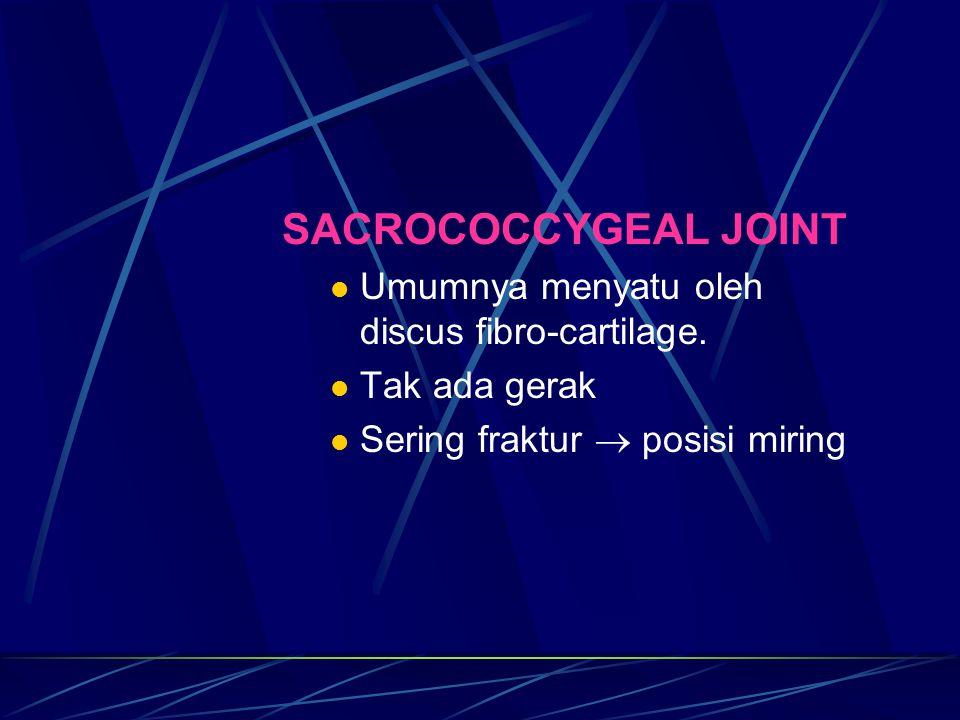 SACROCOCCYGEAL JOINT Umumnya menyatu oleh discus fibro-cartilage. Tak ada gerak Sering fraktur  posisi miring