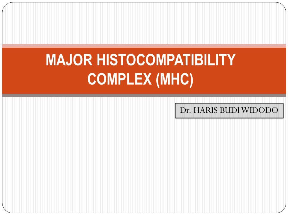 Ekspresi MHC kelas I tersebut terdapat pada targeting cells (sel target yang mengandung antigen intraseluler) yang akan bereaksi dengan TCR dari cytotoxic T limphocytes (CTL) untuk proses eliminasi antigen tersebut.