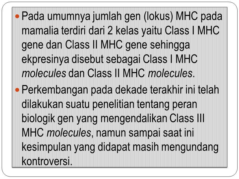 Pada umumnya jumlah gen (lokus) MHC pada mamalia terdiri dari 2 kelas yaitu Class I MHC gene dan Class II MHC gene sehingga ekpresinya disebut sebagai