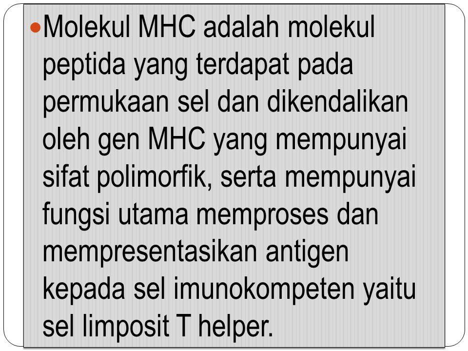 Molekul MHC adalah molekul peptida yang terdapat pada permukaan sel dan dikendalikan oleh gen MHC yang mempunyai sifat polimorfik, serta mempunyai fun