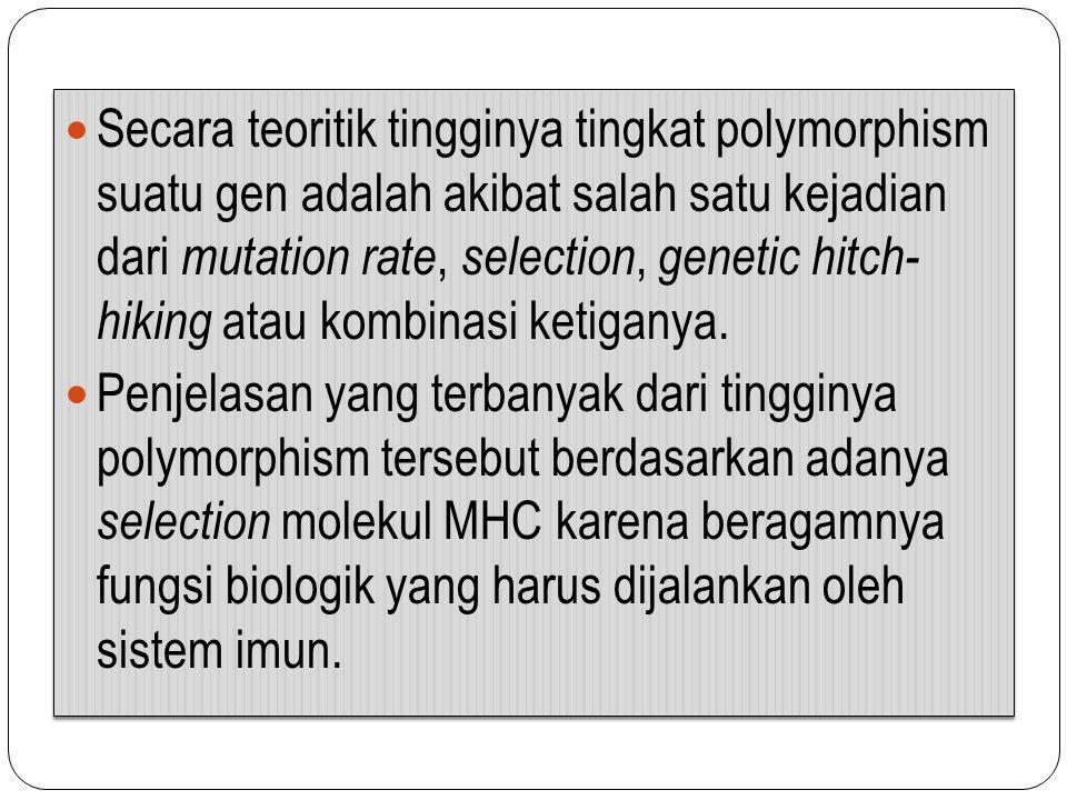 Secara teoritik tingginya tingkat polymorphism suatu gen adalah akibat salah satu kejadian dari mutation rate, selection, genetic hitch- hiking atau k