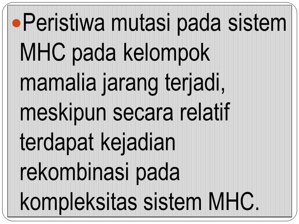 Peristiwa mutasi pada sistem MHC pada kelompok mamalia jarang terjadi, meskipun secara relatif terdapat kejadian rekombinasi pada kompleksitas sistem