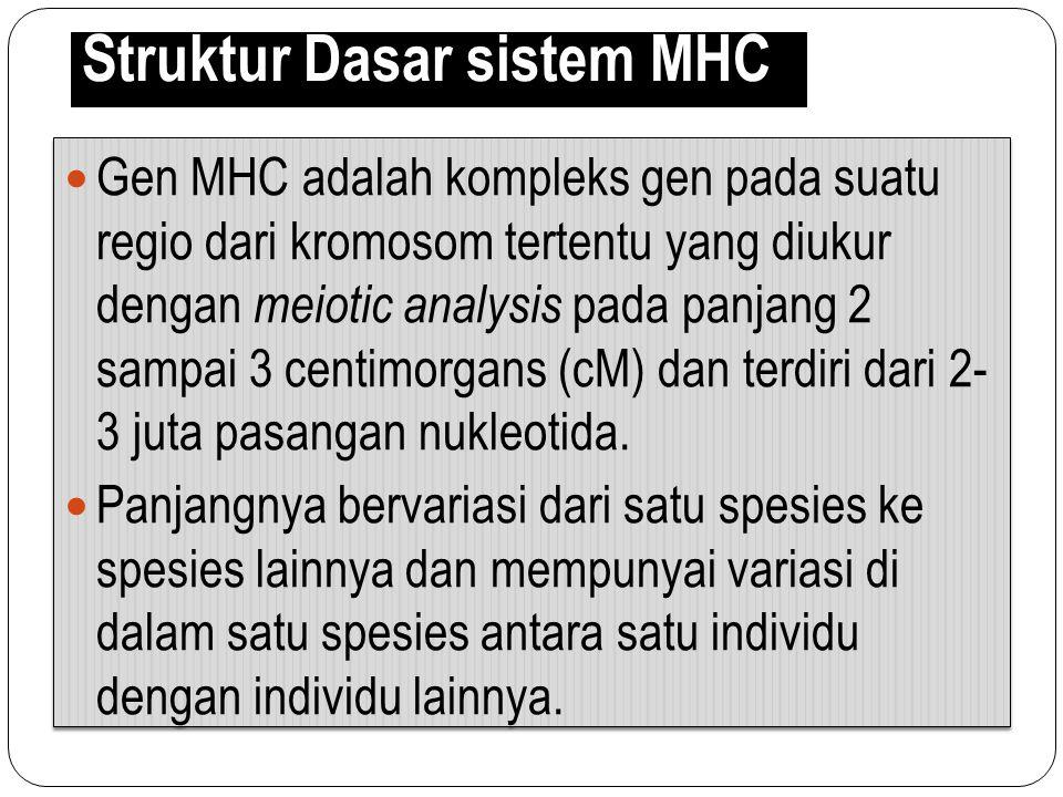 Struktur Dasar sistem MHC Gen MHC adalah kompleks gen pada suatu regio dari kromosom tertentu yang diukur dengan meiotic analysis pada panjang 2 sampa