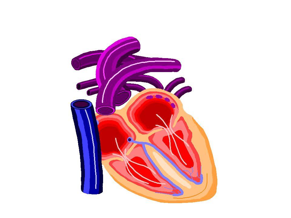 Hypertension Tekanan sistolik lebih dari 160 mmHg dan diastolik > 95 mmHg resiko stroke, congestive heart failure, dan renal failure.