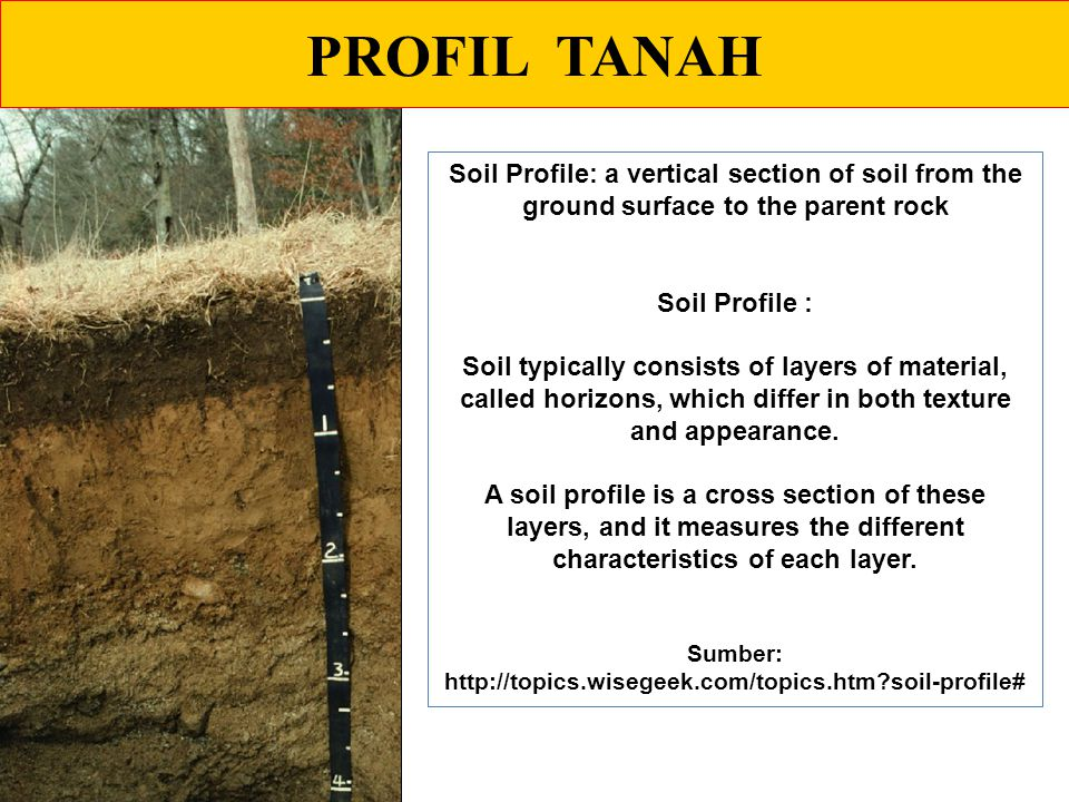 PROFIL TANAH Soil Profile: a vertical section of soil from the ground surface to the parent rock Soil Profile : Soil typically consists of layers of material, called horizons, which differ in both texture and appearance.