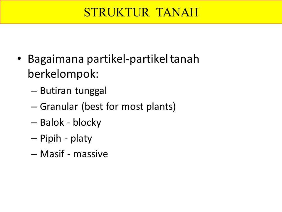 Bagaimana partikel-partikel tanah berkelompok: – Butiran tunggal – Granular (best for most plants) – Balok - blocky – Pipih - platy – Masif - massive