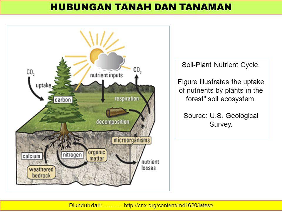 HUBUNGAN TANAH DAN TANAMAN Diunduh dari: ……….. http://cnx.org/content/m41620/latest/ Soil-Plant Nutrient Cycle. Figure illustrates the uptake of nutri