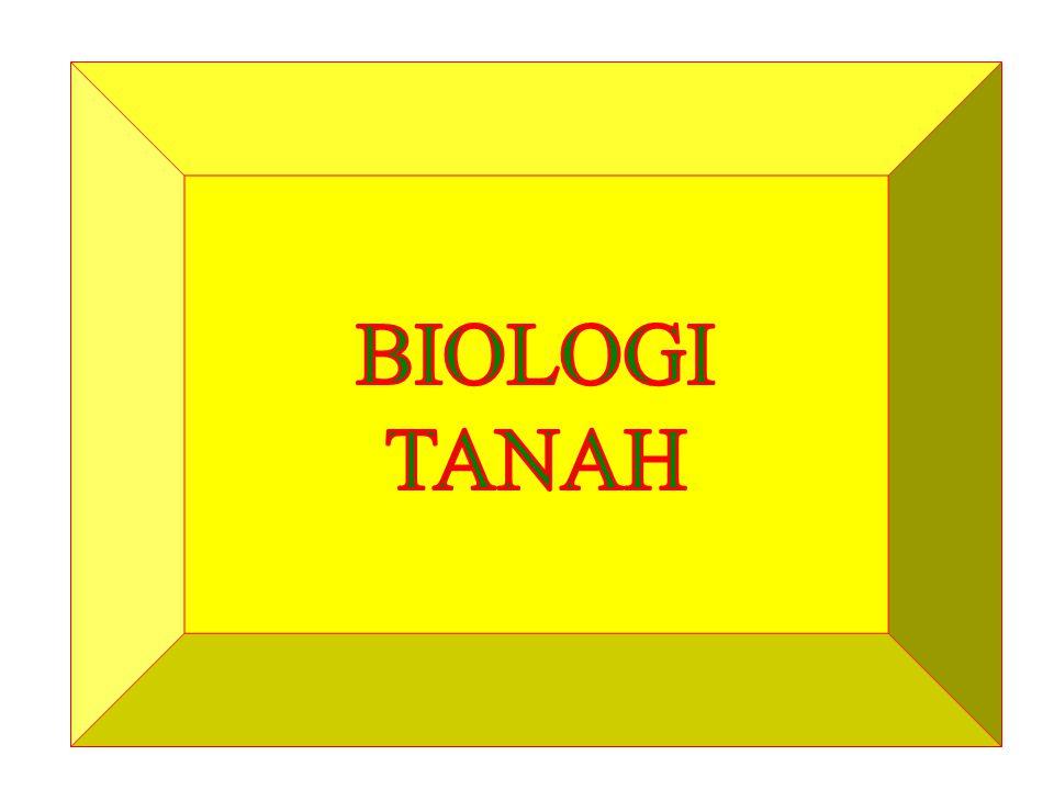 BIOLOGI TANAH Organisme hidup dalam tanah Termasuk mikro dnd makro flora dan fauna.
