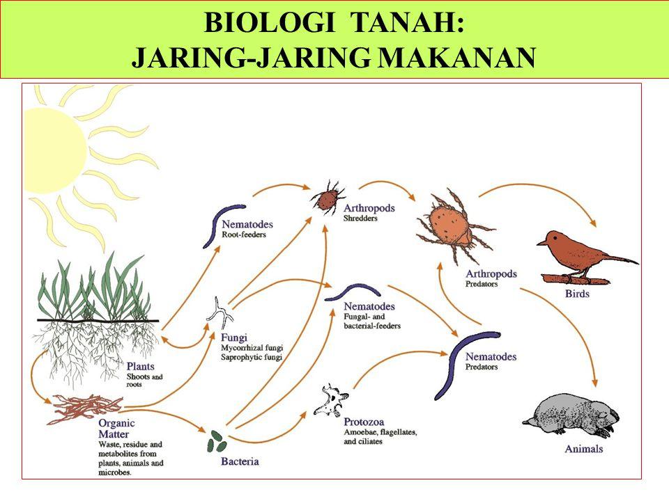 BIOLOGI TANAH: JARING-JARING MAKANAN