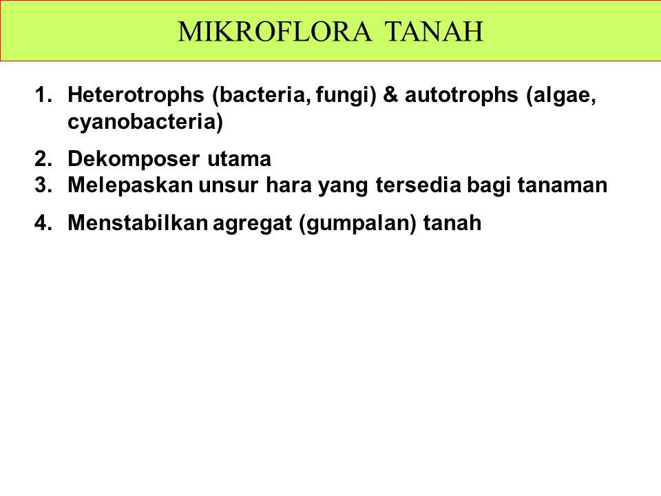 1.Heterotrophs (bacteria, fungi) & autotrophs (algae, cyanobacteria) 2.Dekomposer utama 3.Melepaskan unsur hara yang tersedia bagi tanaman 4.Menstabilkan agregat (gumpalan) tanah MIKROFLORA TANAH