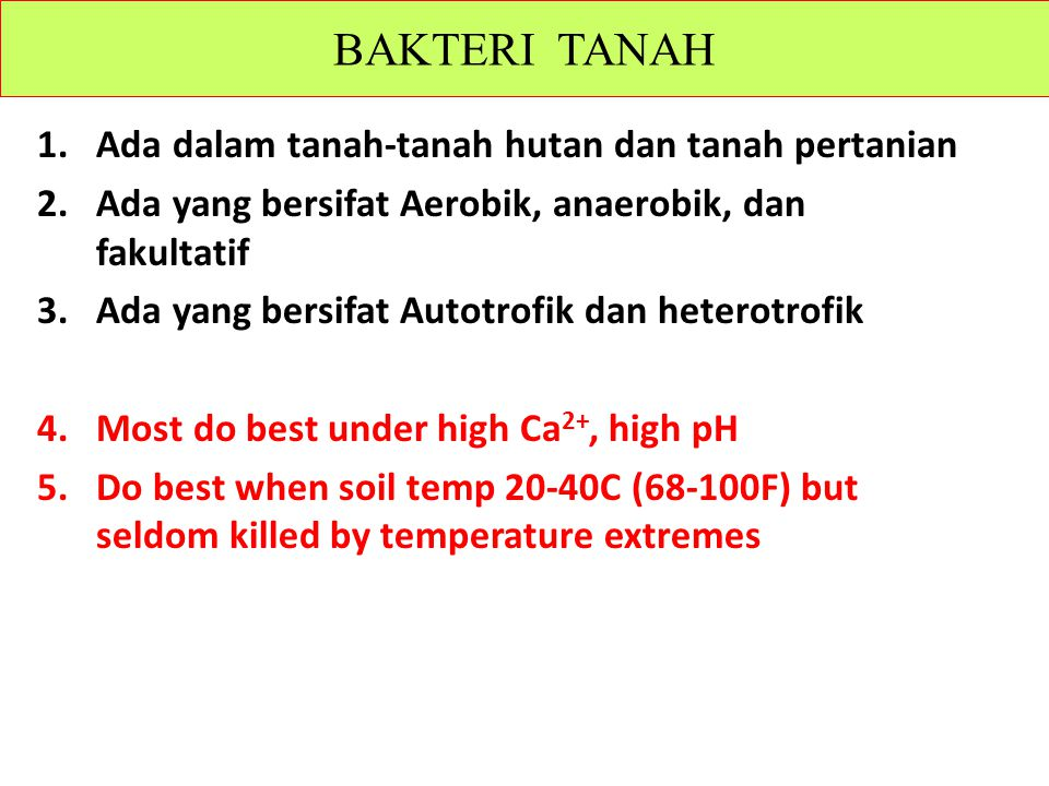 1.Ada dalam tanah-tanah hutan dan tanah pertanian 2.Ada yang bersifat Aerobik, anaerobik, dan fakultatif 3.Ada yang bersifat Autotrofik dan heterotrofik 4.Most do best under high Ca 2+, high pH 5.Do best when soil temp 20-40C (68-100F) but seldom killed by temperature extremes Microflora – BAKTERI TANAH