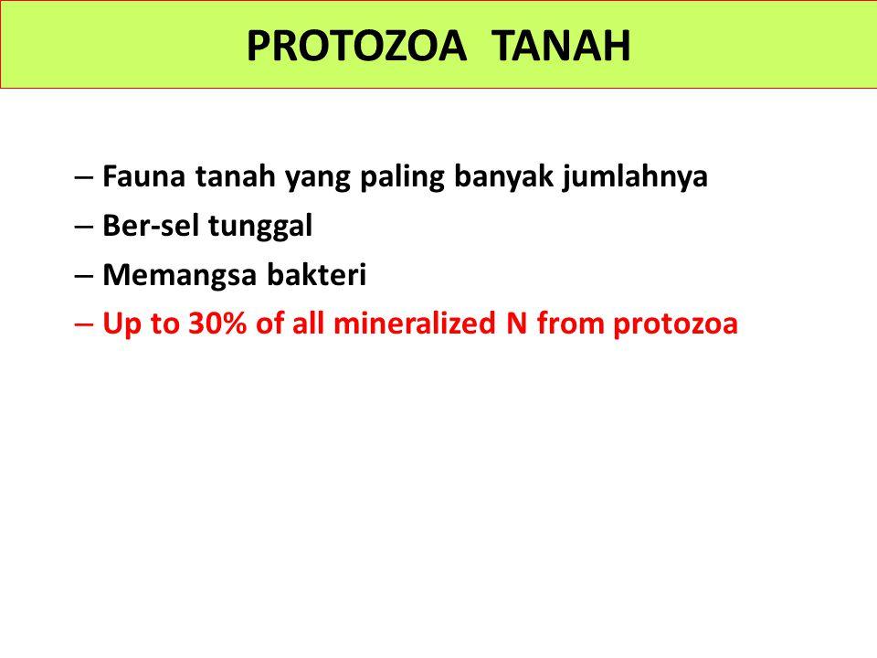 – Fauna tanah yang paling banyak jumlahnya – Ber-sel tunggal – Memangsa bakteri – Up to 30% of all mineralized N from protozoa PROTOZOA TANAH
