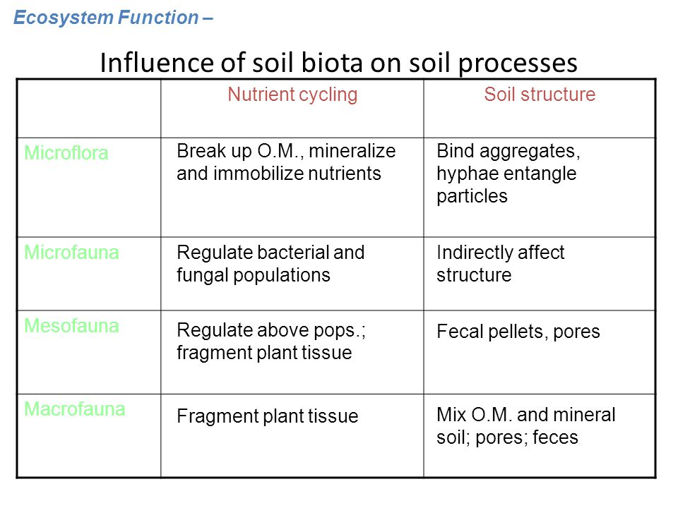 Influence of soil biota on soil processes Nutrient cyclingSoil structure Microflora Microfauna Mesofauna Macrofauna Break up O.M., mineralize and immobilize nutrients Bind aggregates, hyphae entangle particles Regulate bacterial and fungal populations Indirectly affect structure Regulate above pops.; fragment plant tissue Fecal pellets, pores Fragment plant tissue Mix O.M.