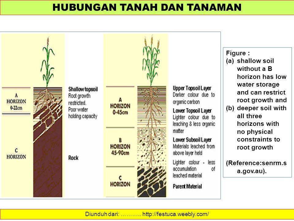 HUBUNGAN TANAH DAN TANAMAN Diunduh dari: ……….. http://festuca.weebly.com/ Figure : (a)shallow soil without a B horizon has low water storage and can r