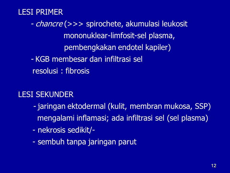 LESI PRIMER - chancre (>>> spirochete, akumulasi leukosit mononuklear-limfosit-sel plasma, pembengkakan endotel kapiler) - KGB membesar dan infiltrasi
