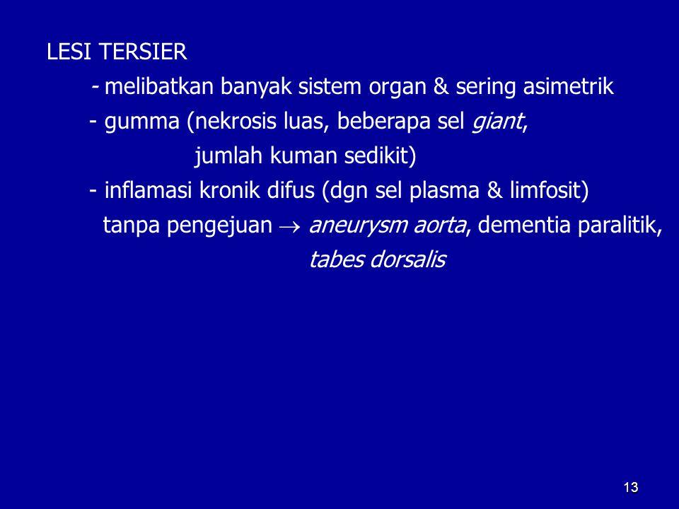 13 LESI TERSIER - melibatkan banyak sistem organ & sering asimetrik - gumma (nekrosis luas, beberapa sel giant, jumlah kuman sedikit) - inflamasi kron