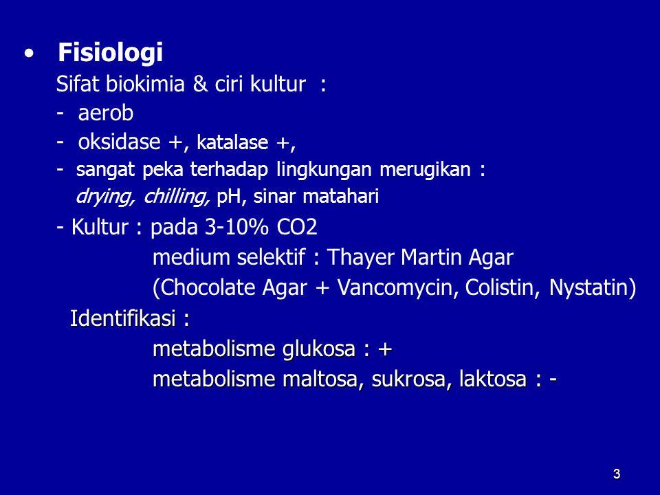 Fisiologi Sifat biokimia & ciri kultur : - aerob - oksidase +, katalase +, - sangat peka terhadap lingkungan merugikan : drying, chilling, pH, sinar m