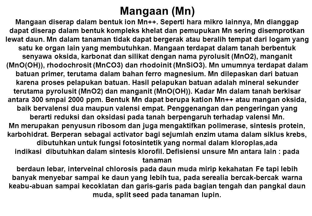 Mangaan (Mn) Mangaan diserap dalam bentuk ion Mn++. Seperti hara mikro lainnya, Mn dianggap dapat diserap dalam bentuk kompleks khelat dan pemupukan M