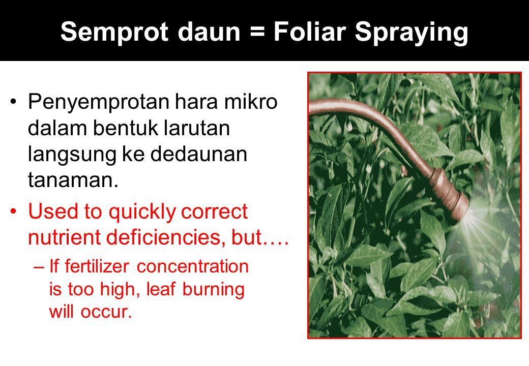 Semprot daun = Foliar Spraying Penyemprotan hara mikro dalam bentuk larutan langsung ke dedaunan tanaman. Used to quickly correct nutrient deficiencie