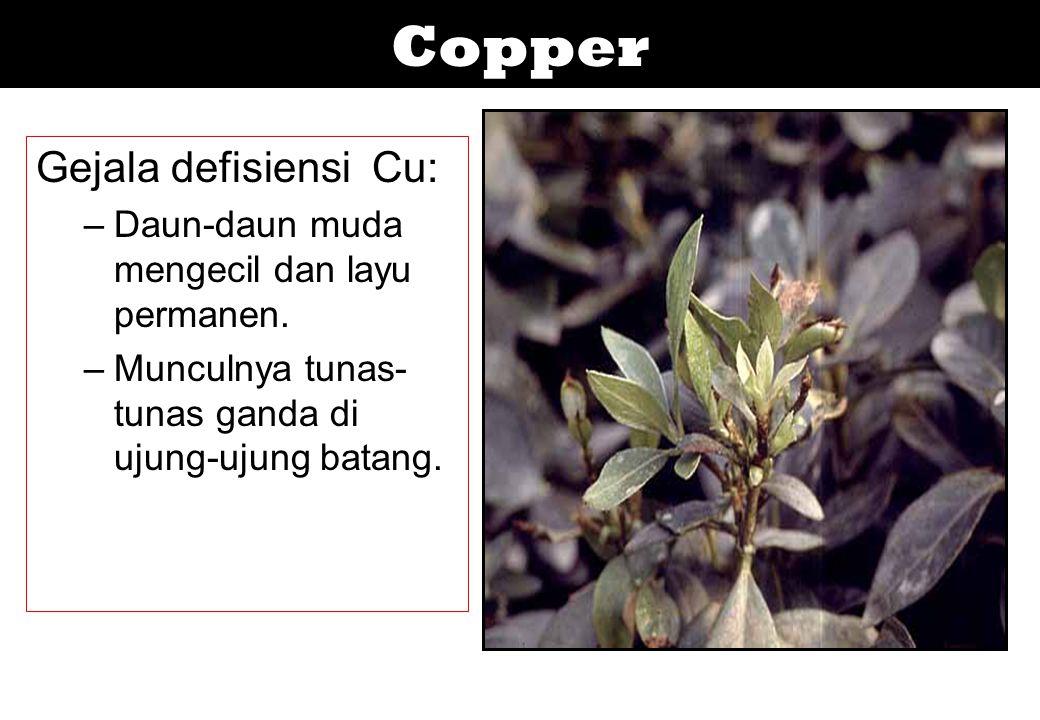 Copper Gejala defisiensi Cu: –Daun-daun muda mengecil dan layu permanen. –Munculnya tunas- tunas ganda di ujung-ujung batang.