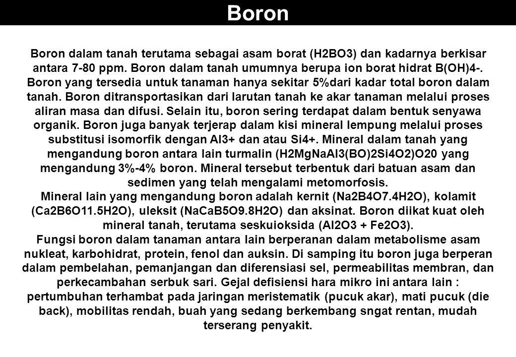 Boron Boron dalam tanah terutama sebagai asam borat (H2BO3) dan kadarnya berkisar antara 7-80 ppm. Boron dalam tanah umumnya berupa ion borat hidrat B