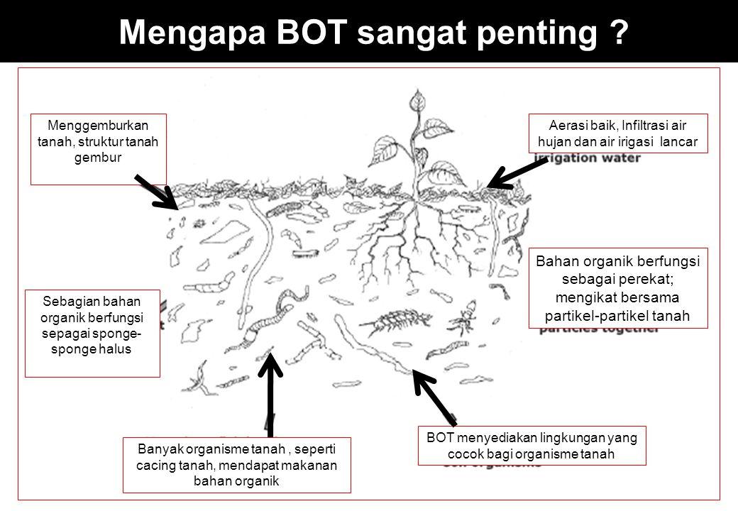 Mengapa BOT sangat penting ? Menggemburkan tanah, struktur tanah gembur Aerasi baik, Infiltrasi air hujan dan air irigasi lancar Bahan organik berfung