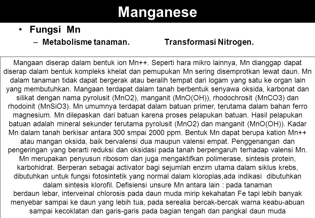 Manganese Fungsi Mn –Metabolisme tanaman.Transformasi Nitrogen. Mangaan diserap dalam bentuk ion Mn++. Seperti hara mikro lainnya, Mn dianggap dapat d