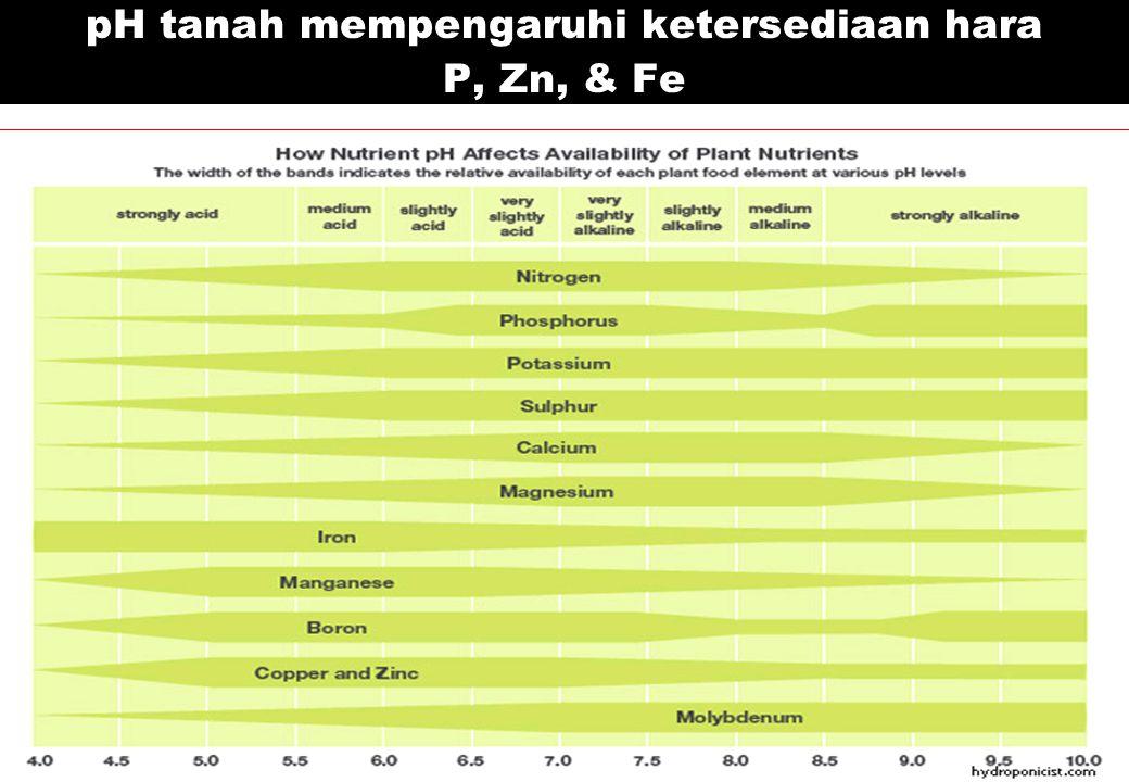 pH tanah mempengaruhi ketersediaan hara P, Zn, & Fe