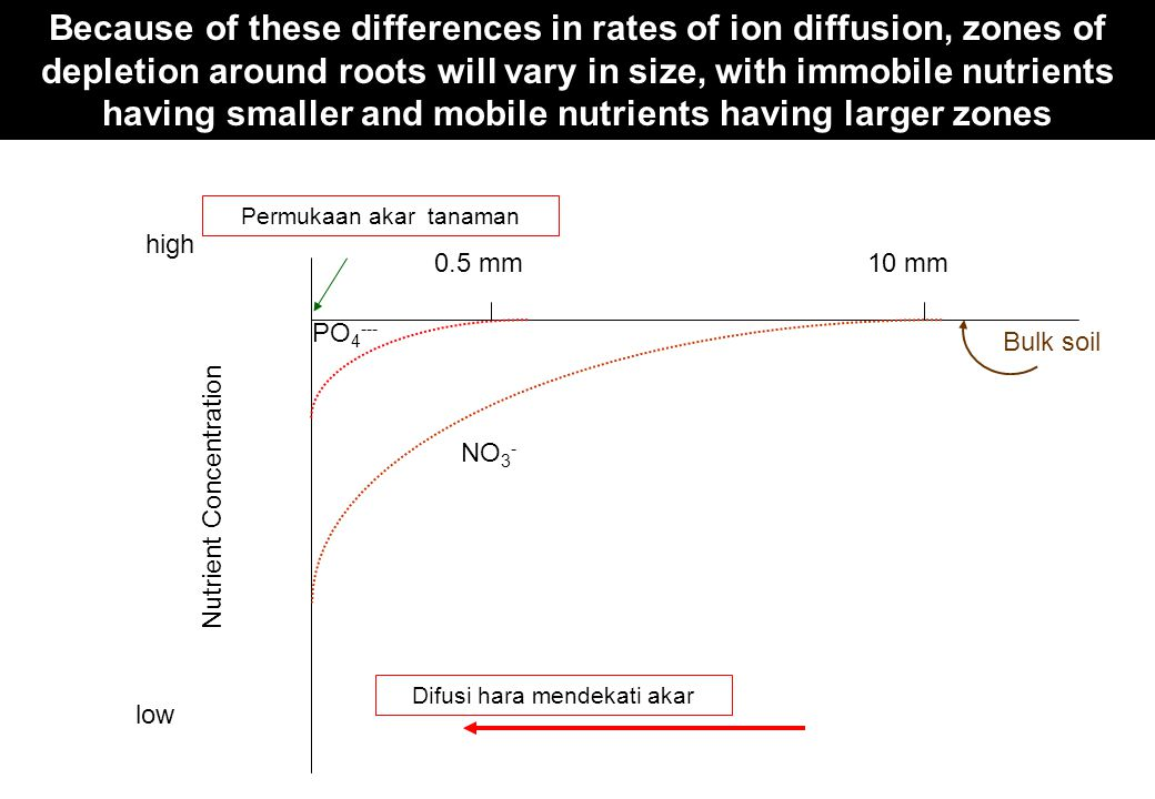 Diffusion toward root Nutrient Concentration Root surface Bulk soil high low Because of these differences in rates of ion diffusion, zones of depletio