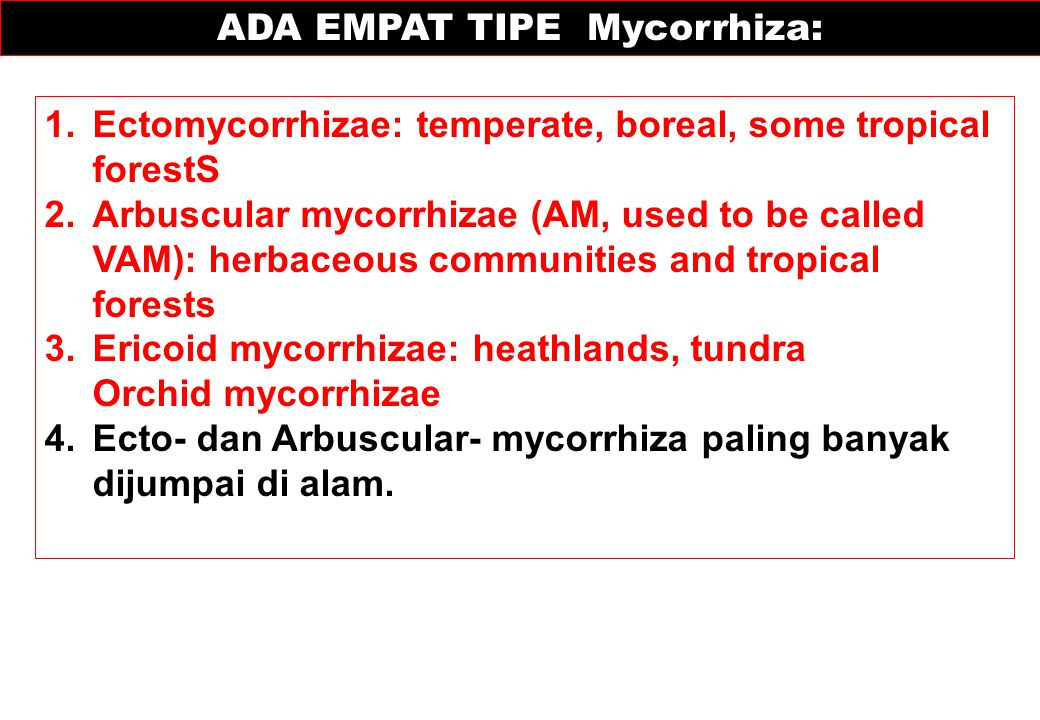 ADA EMPAT TIPE Mycorrhiza: 1.Ectomycorrhizae: temperate, boreal, some tropical forestS 2.Arbuscular mycorrhizae (AM, used to be called VAM): herbaceou